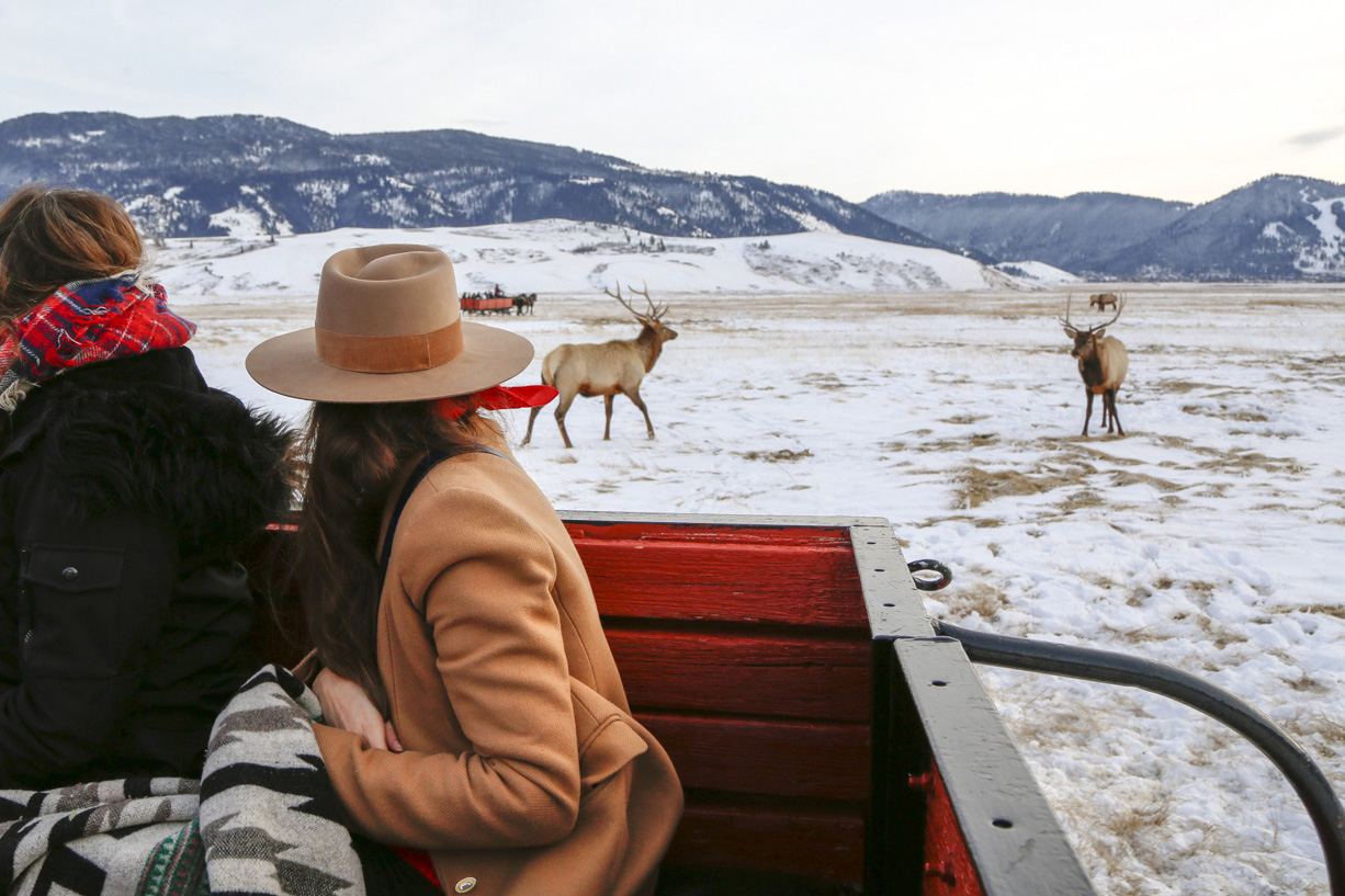 National Elk Refuge Sleigh Ride