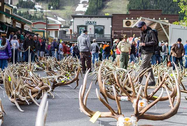 Elk Fest in Jackson Hole