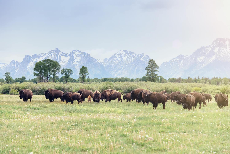 Wildlife at Jackson Hole WY