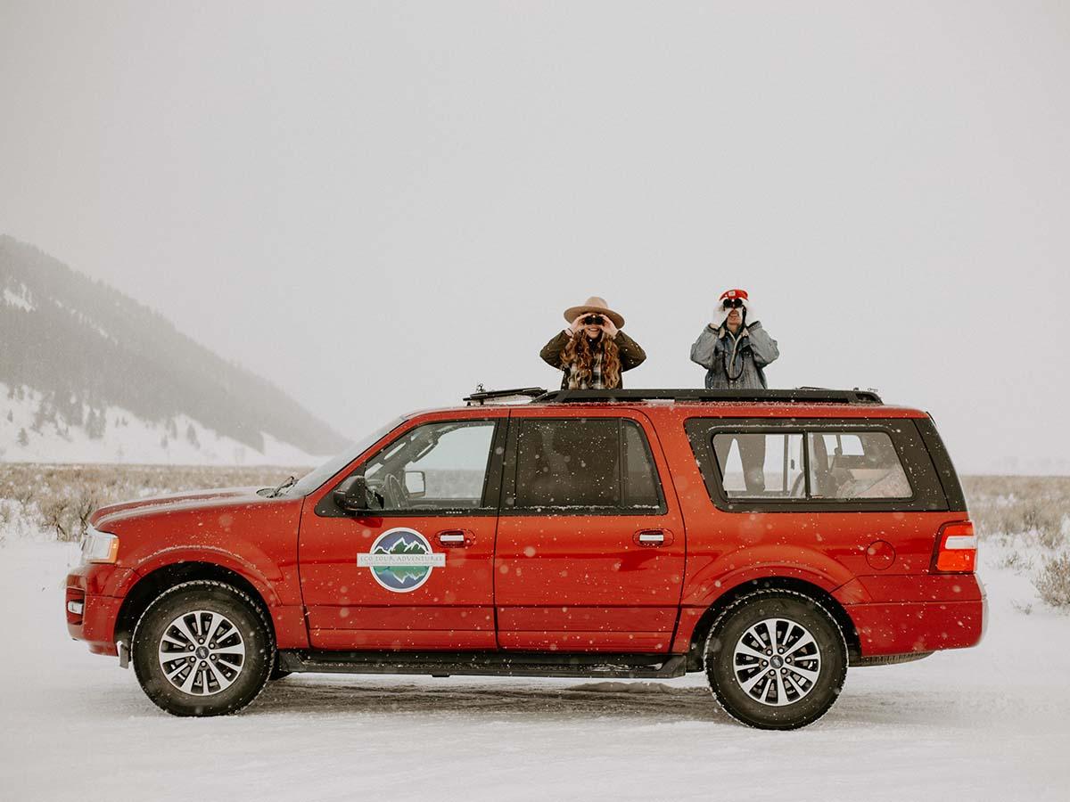 wildlife tour van